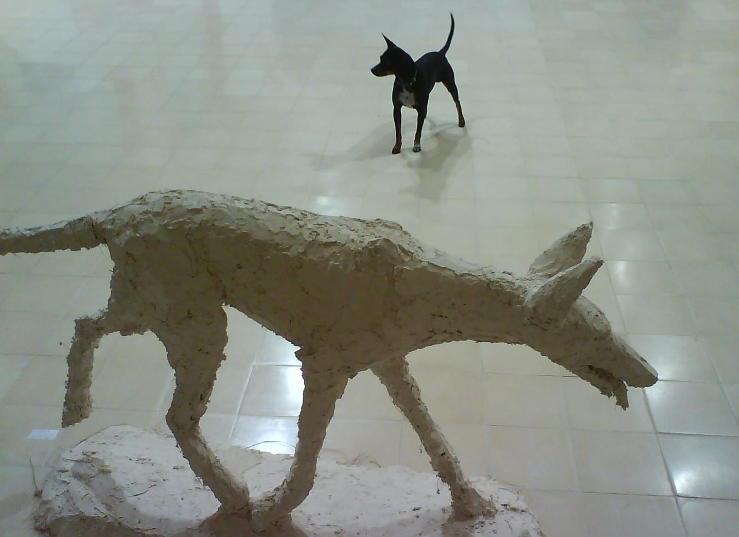 perros-expo09
